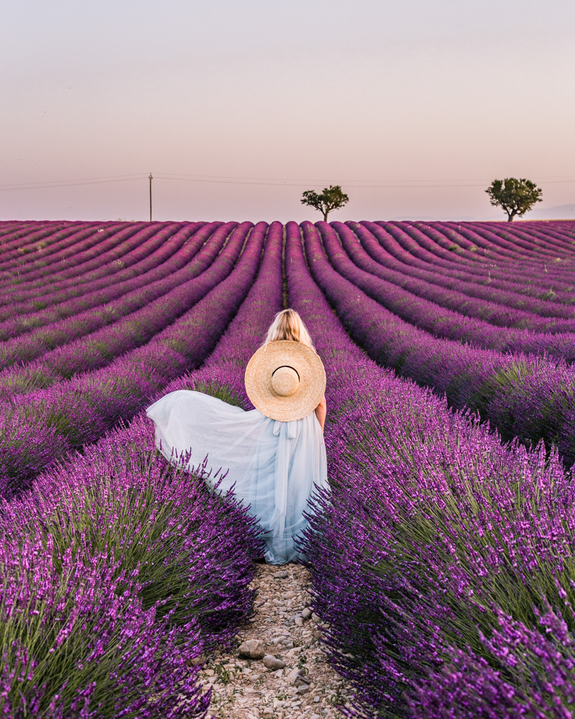 Essential Guide To The Lavender Fields In Provence Limitless Secrets