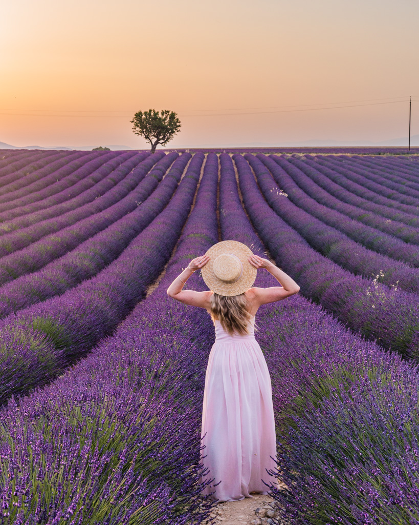 Sunrise in the lavender fields in Provence, France